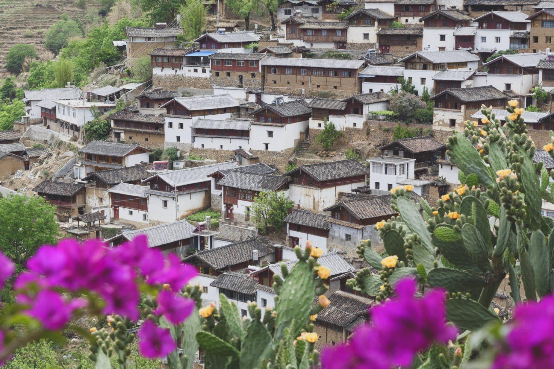 Village de Baoshan, cactus et bougainvilliers