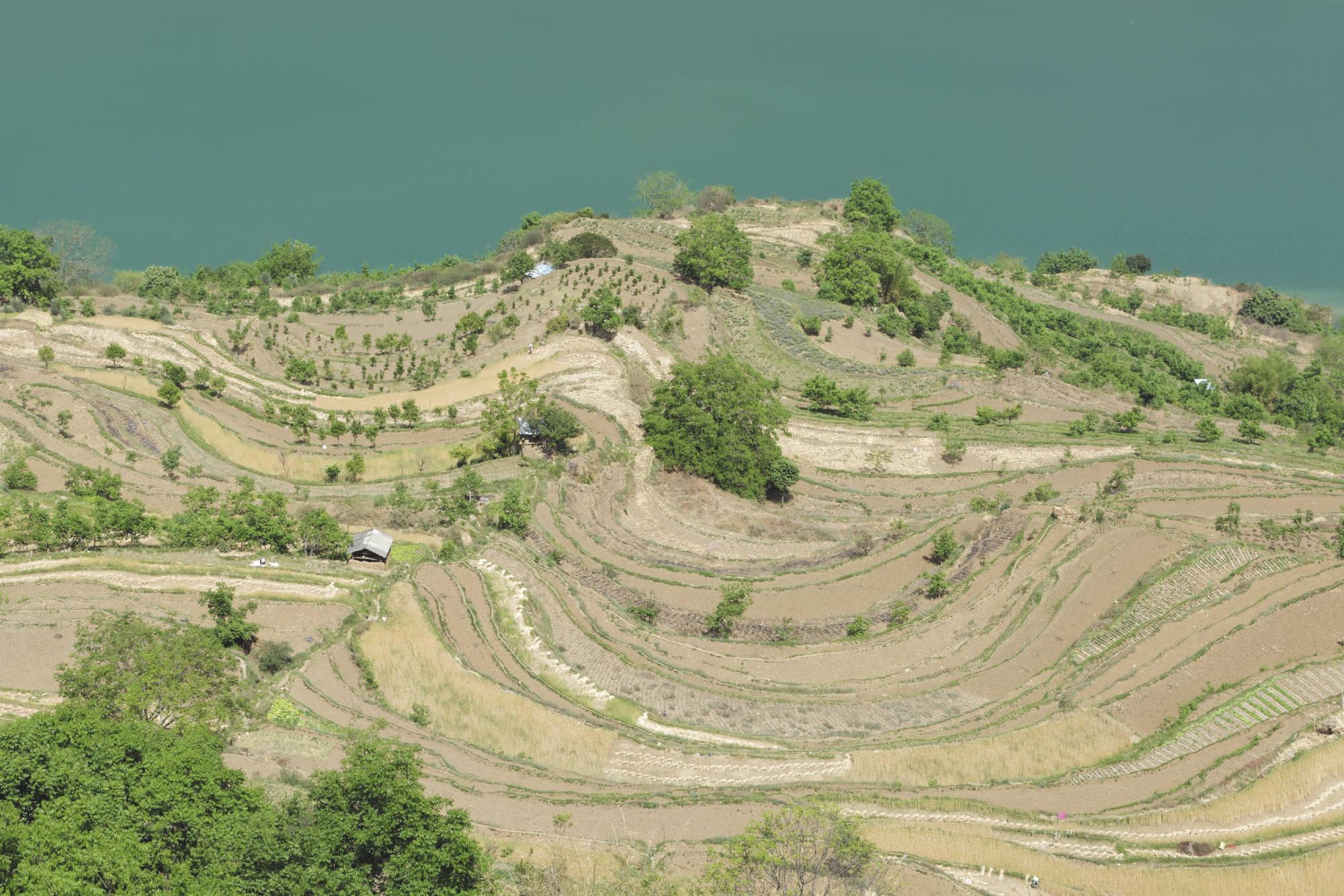 Cultures en terrasses et Yangzi