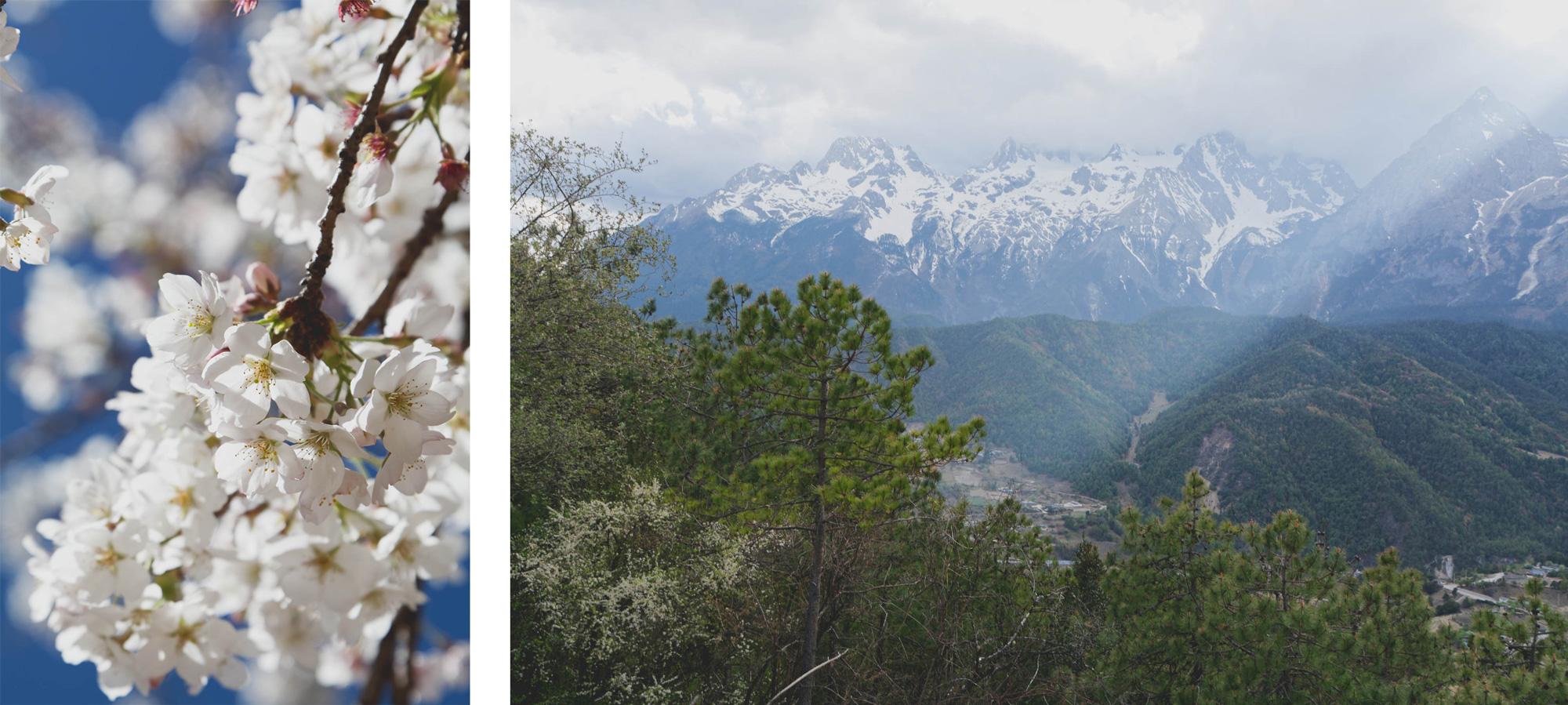 Fleurs de cerisier, montagnes et forêts