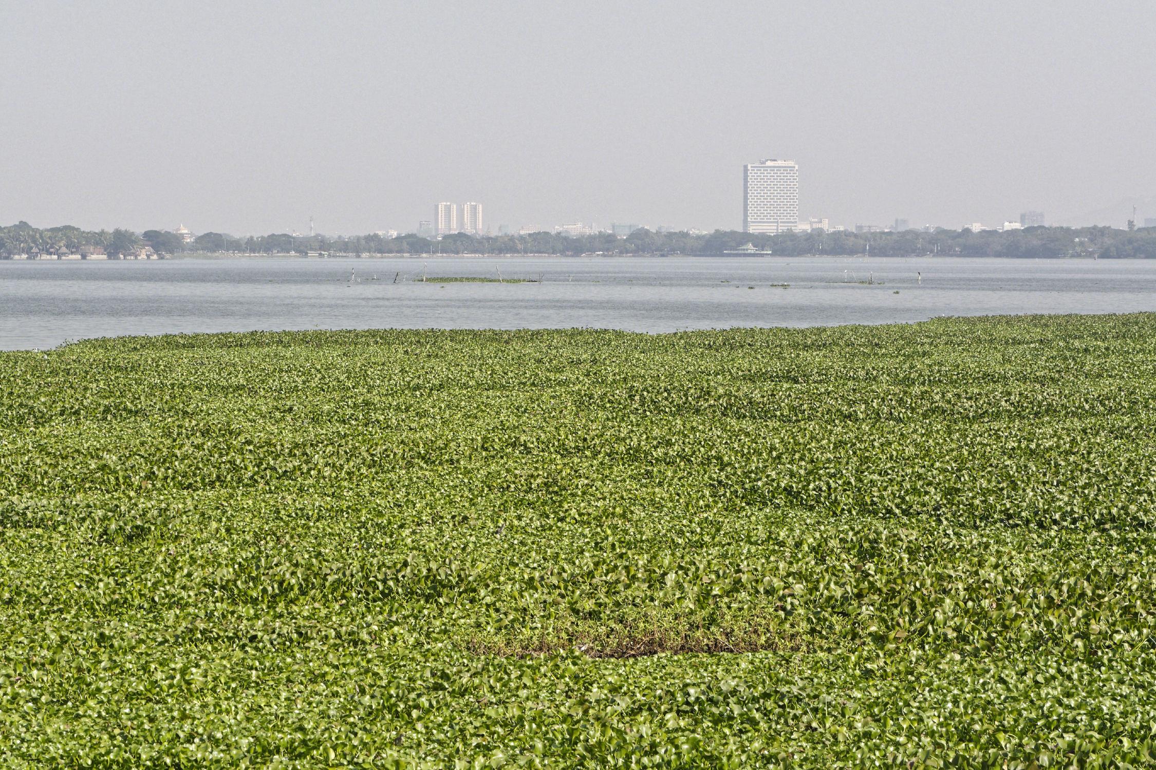 Lac Kandawgyi Mandalay
