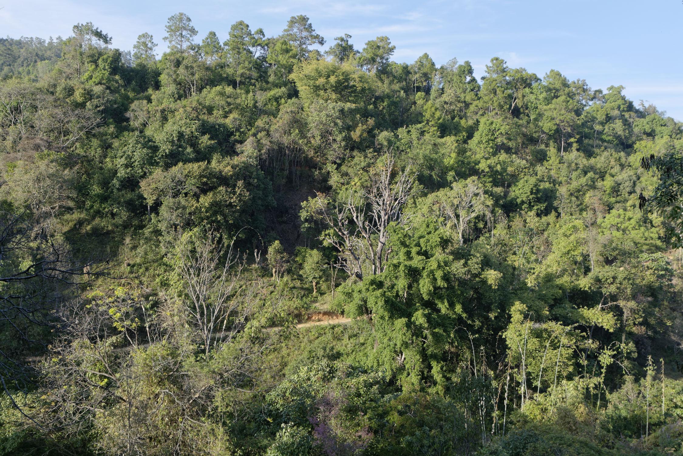 Jungle région de Hsipaw