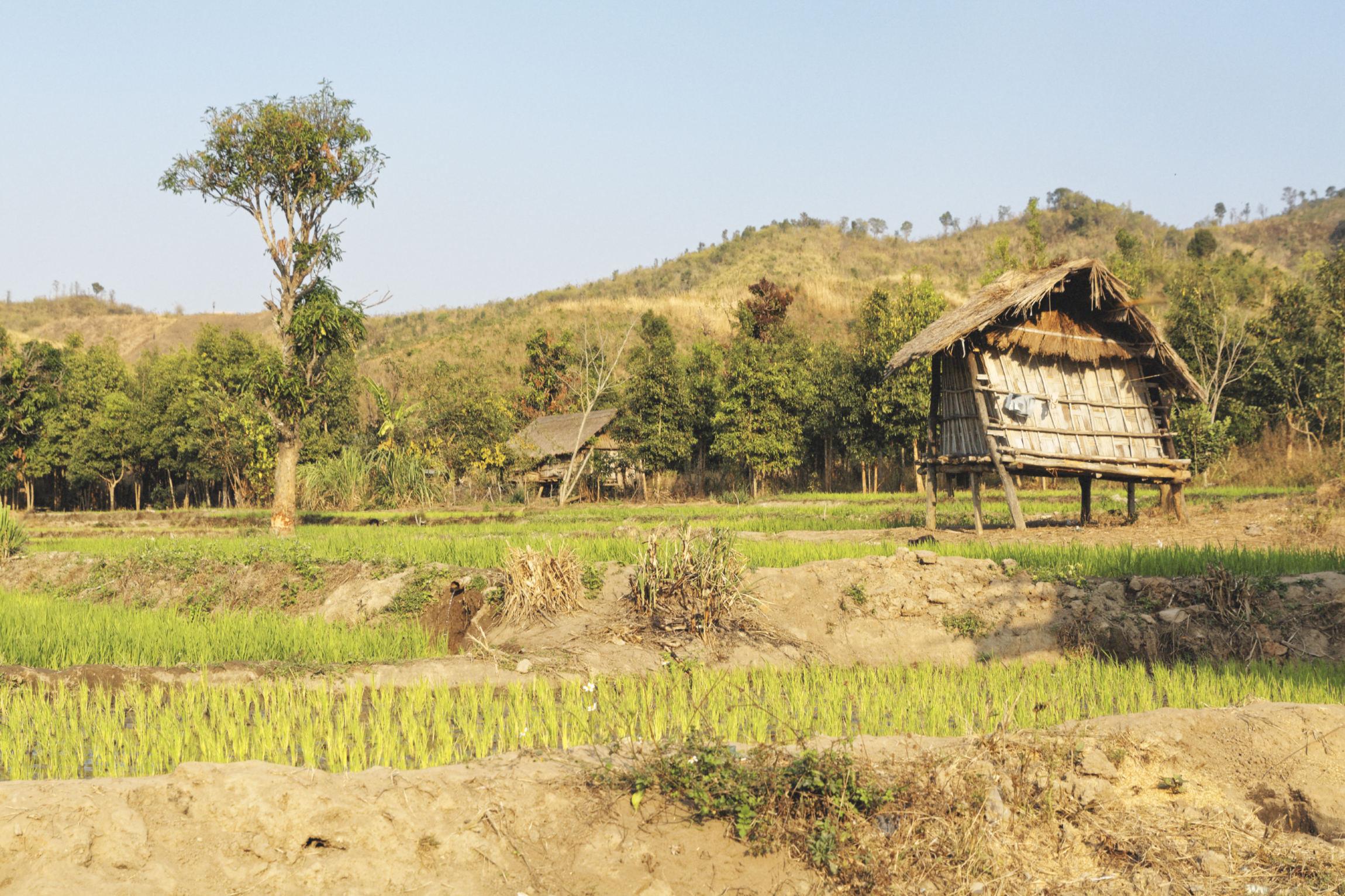 Hutte et rizière Kon Knoh