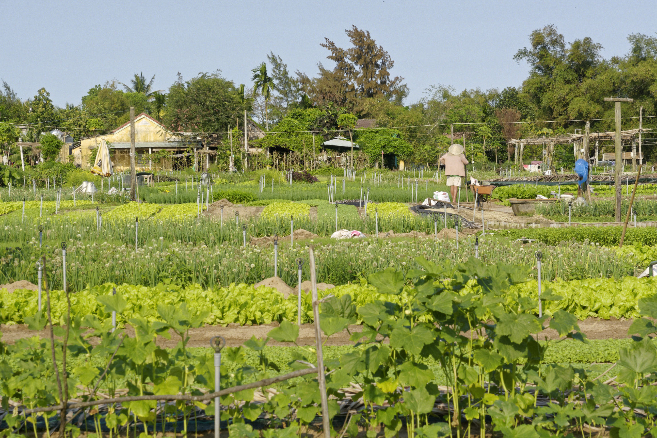 Jardins de Tra Que