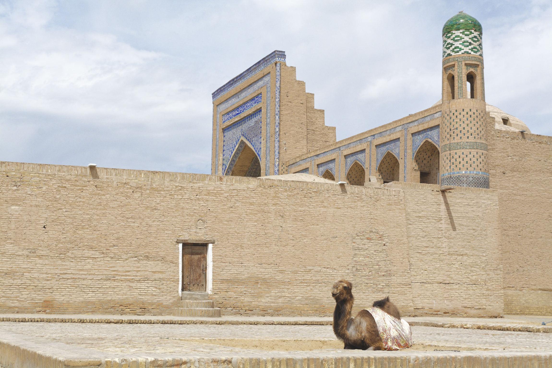 Chameau Khiva