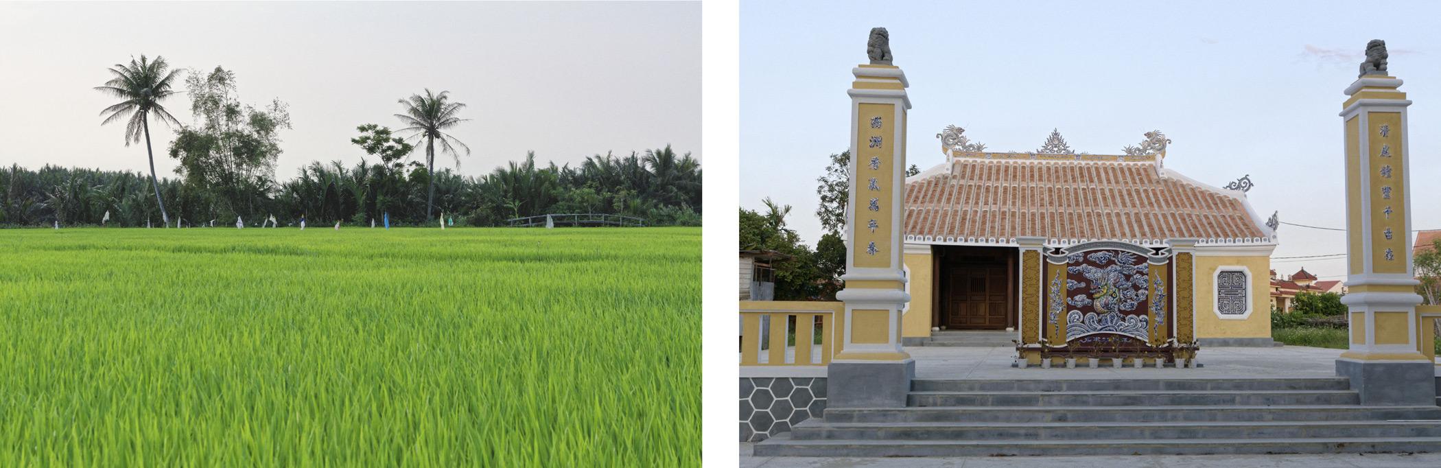 Rizières et temple