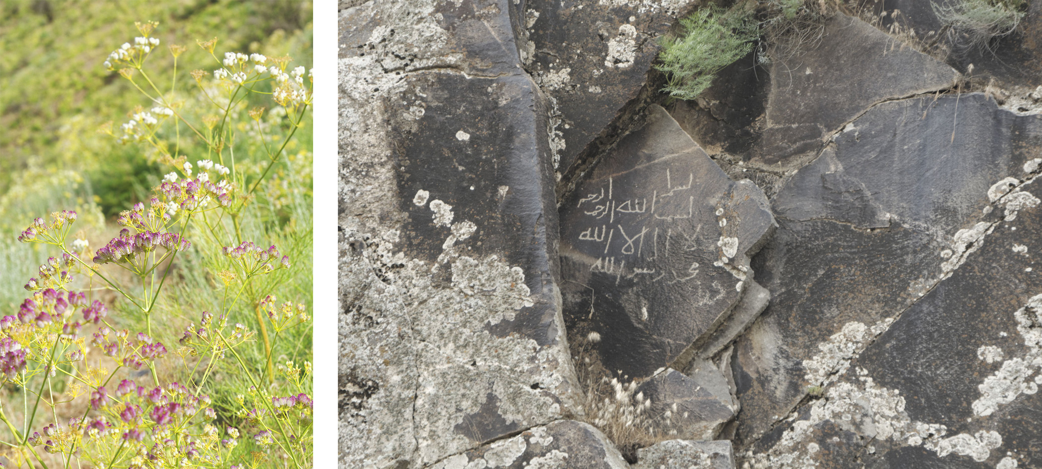 Fleurs et pétroglyphes
