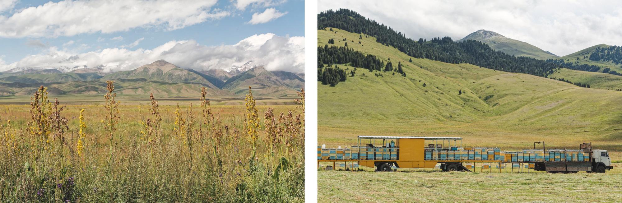 Fleurs et ruches Kirghizstan
