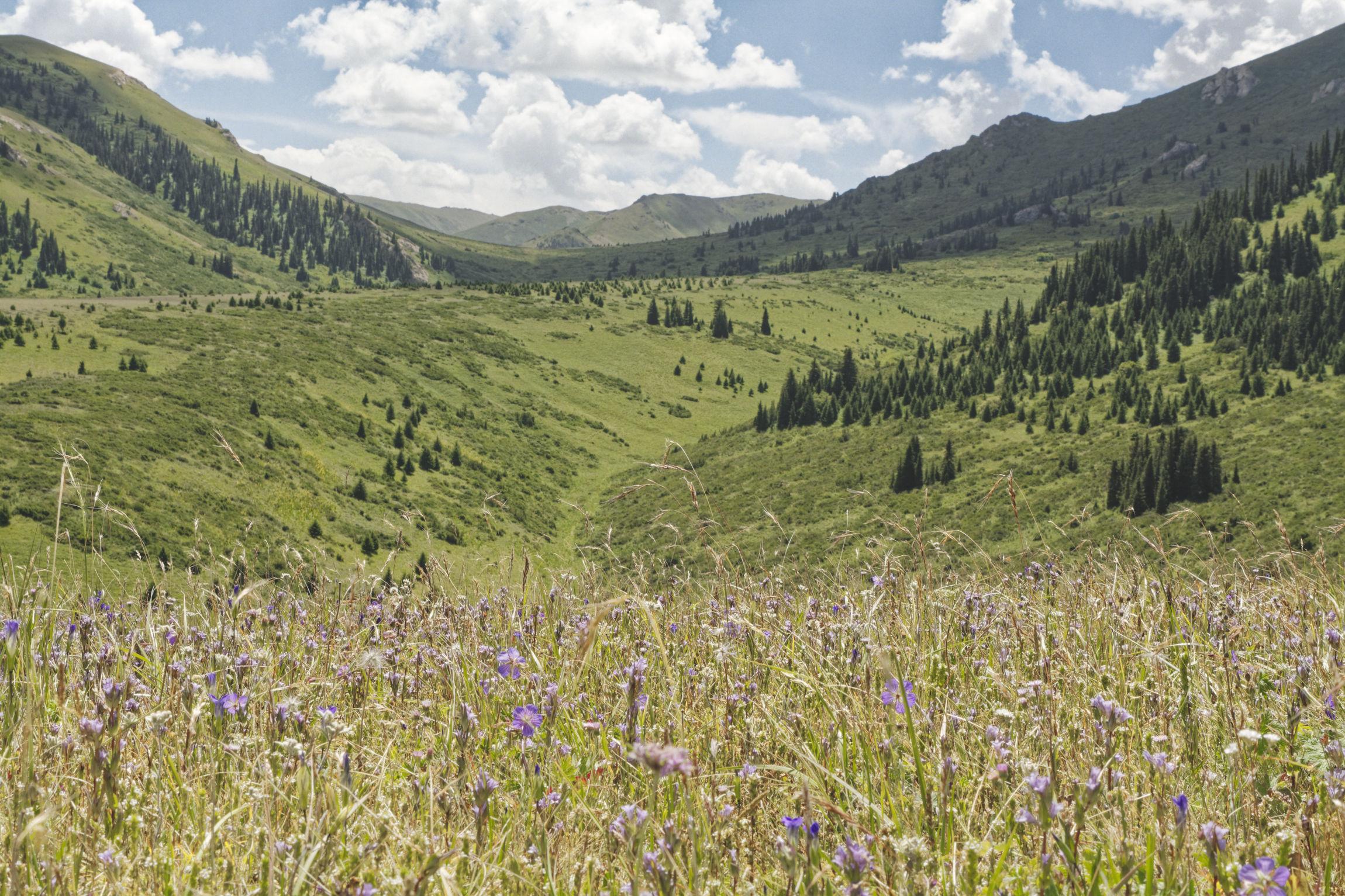 Vallée alpine de Bosogo Kirghizstan