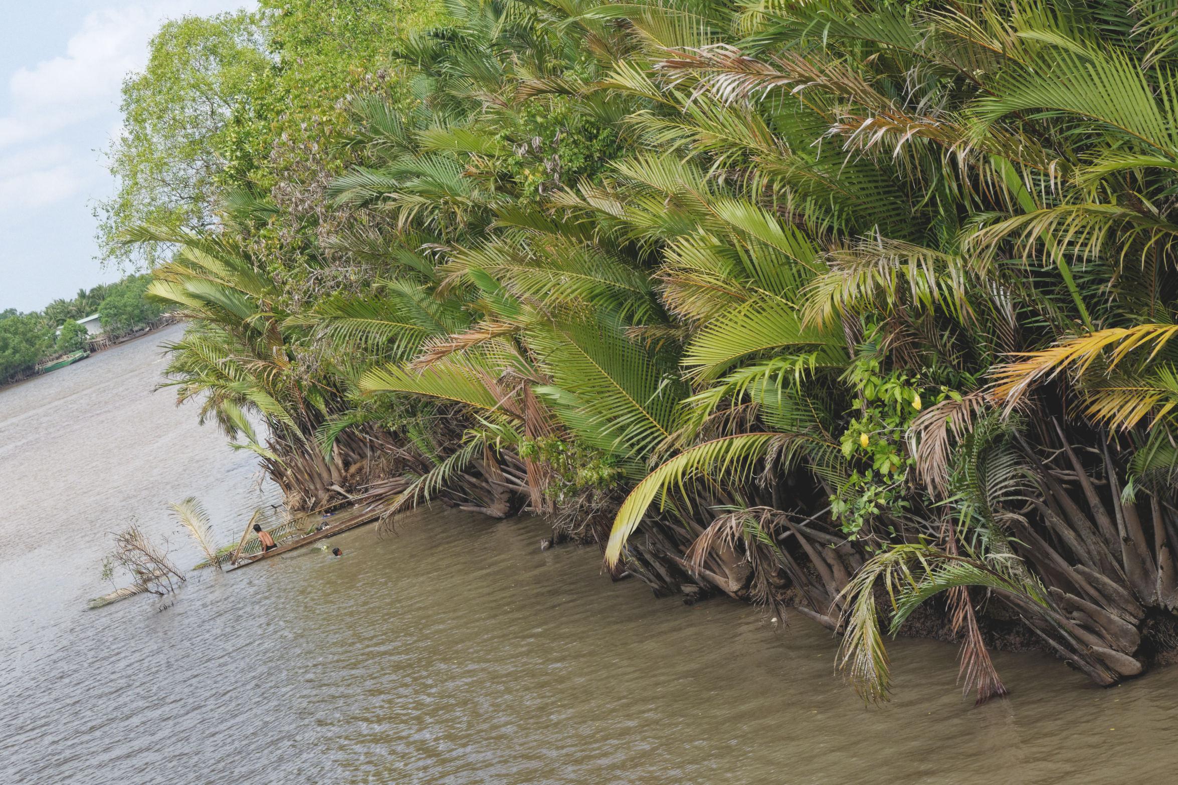 Delta du Mekong palmiers