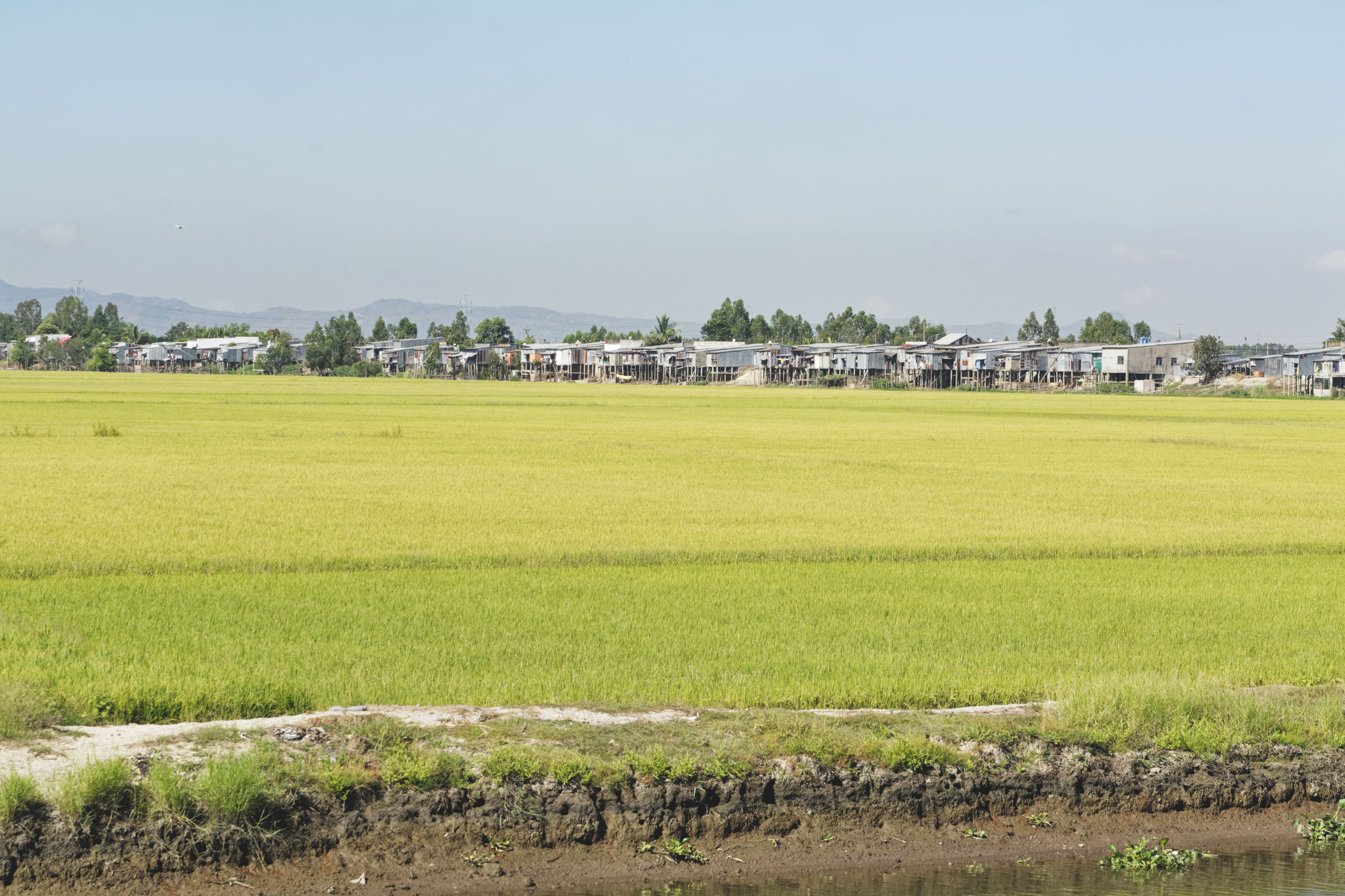 Delta du Mékong rizières et pilotis