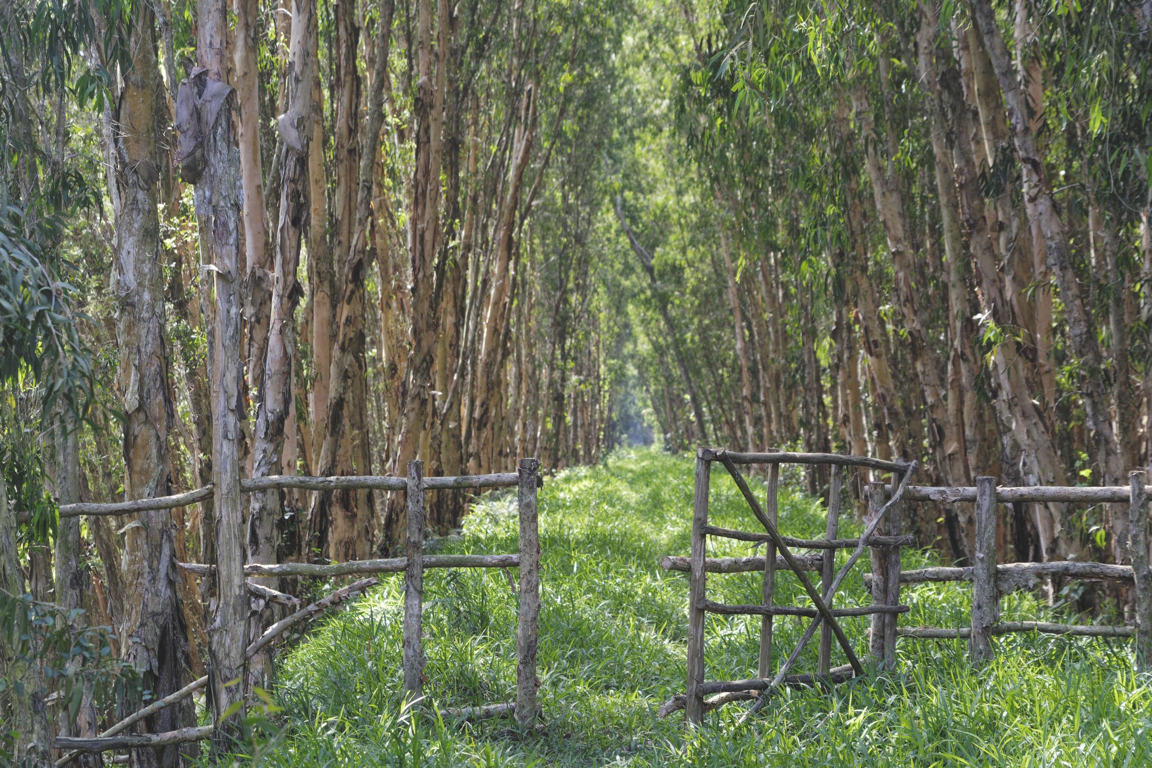 Delta du Mékong forêt de Tra Su