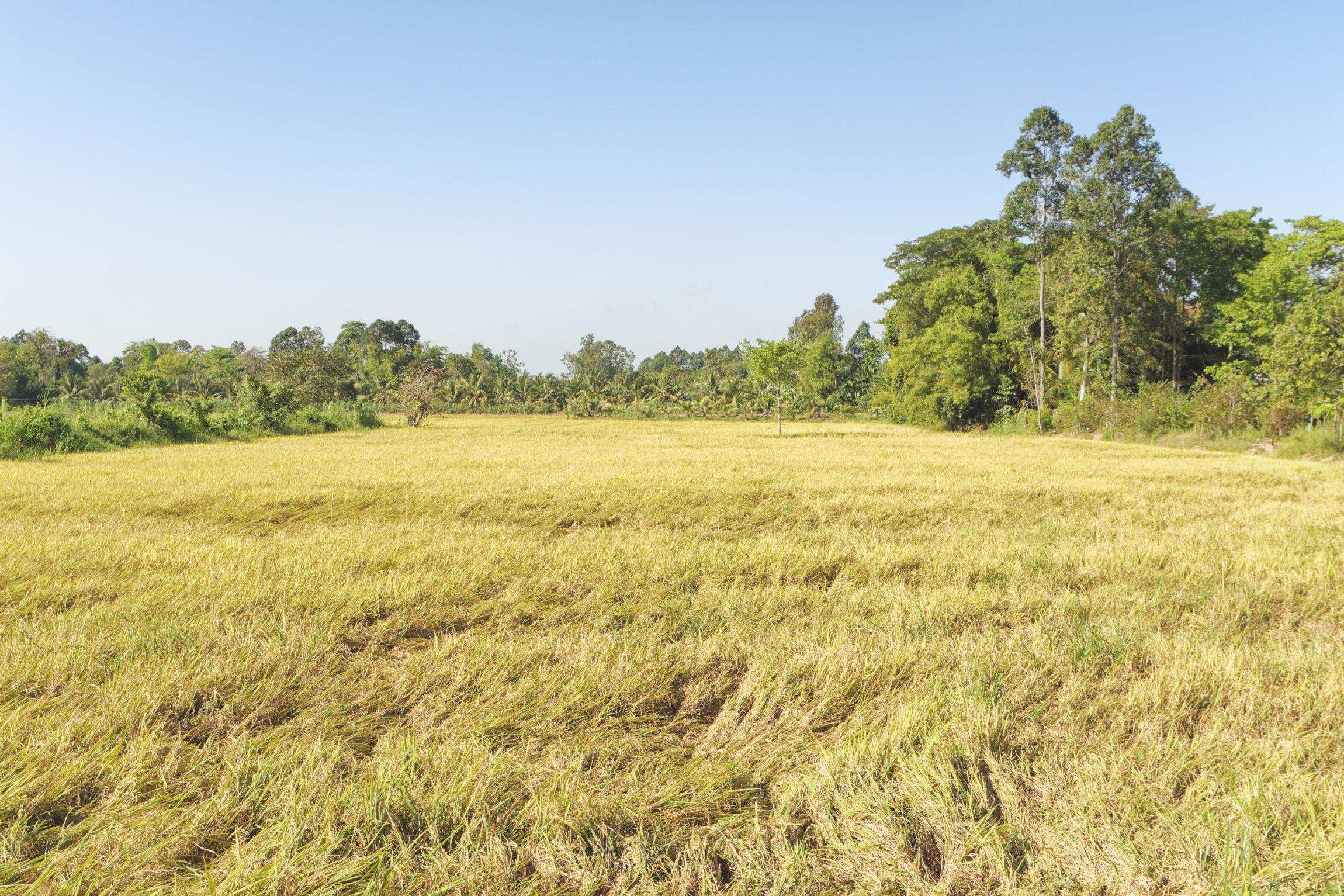 Delta du Mékong Ile du Tigre