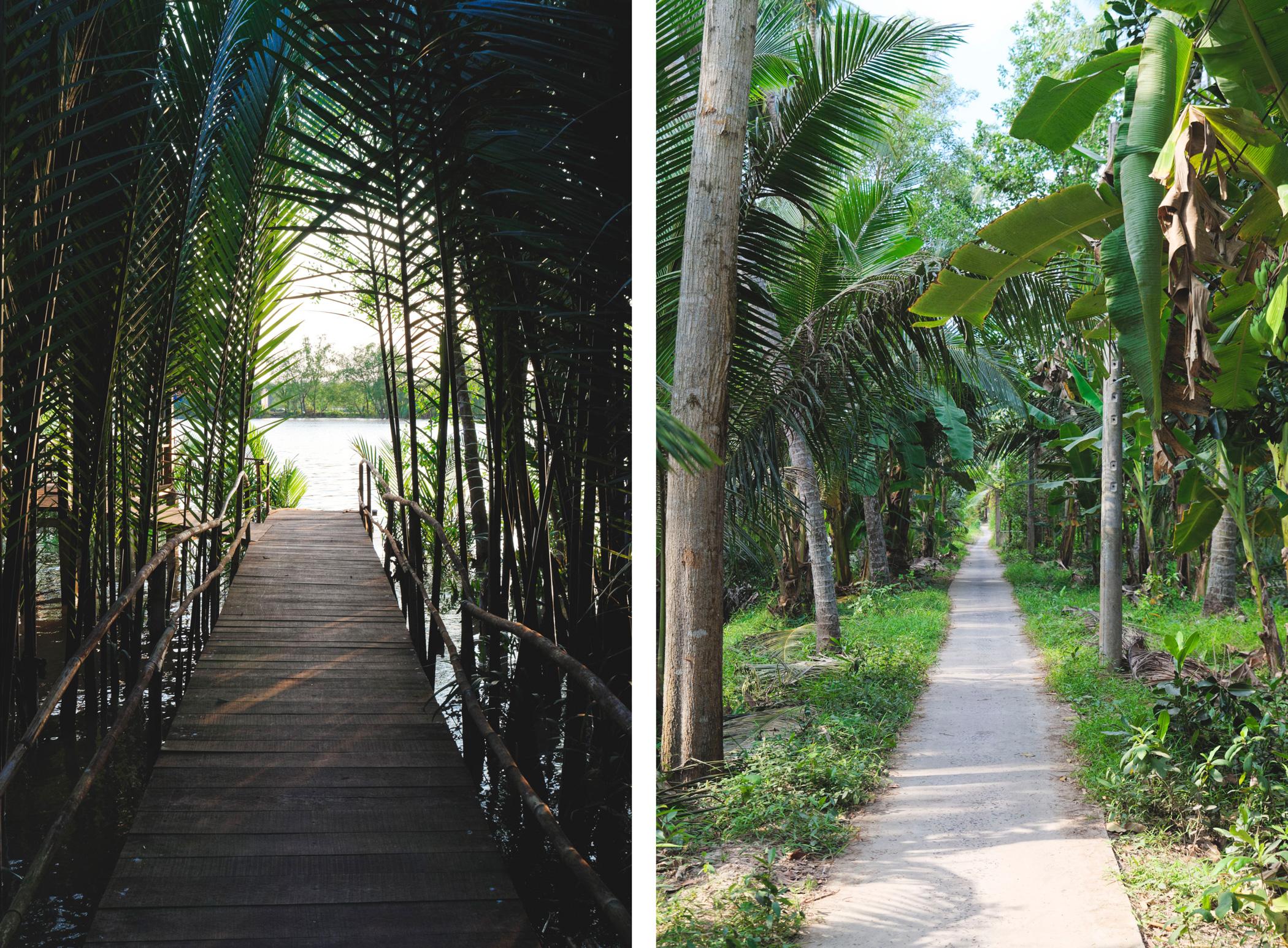 Delta du Mekong : palmes