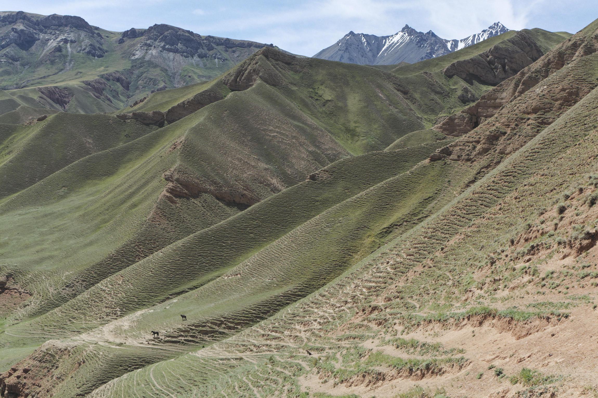 Chevaux au pied de grandes pentes herbeuses vallée de Kaindy Kirghizstan