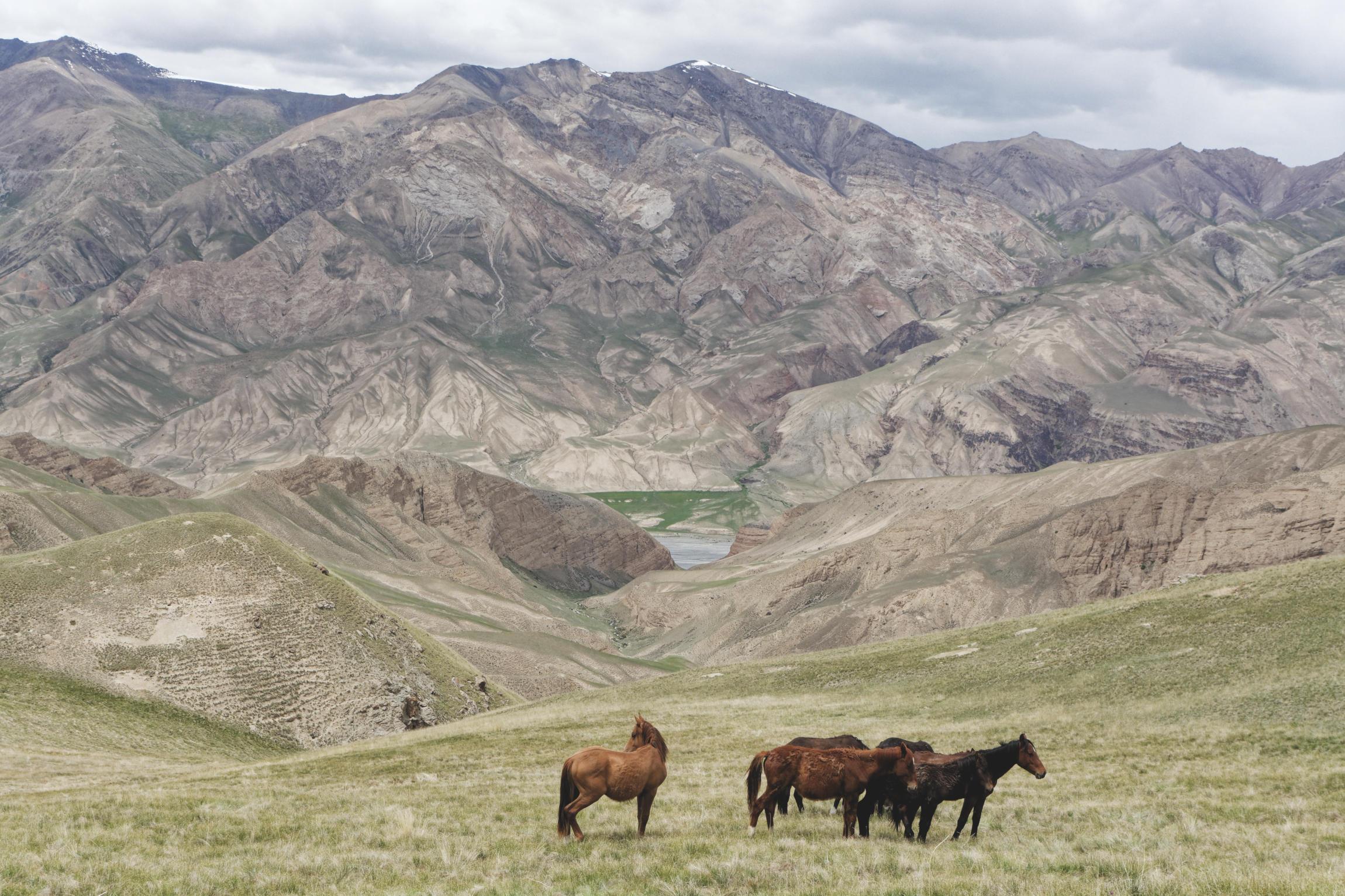 Chevaux sauvages et montagnes vallée de Kaindy Kirghizstan