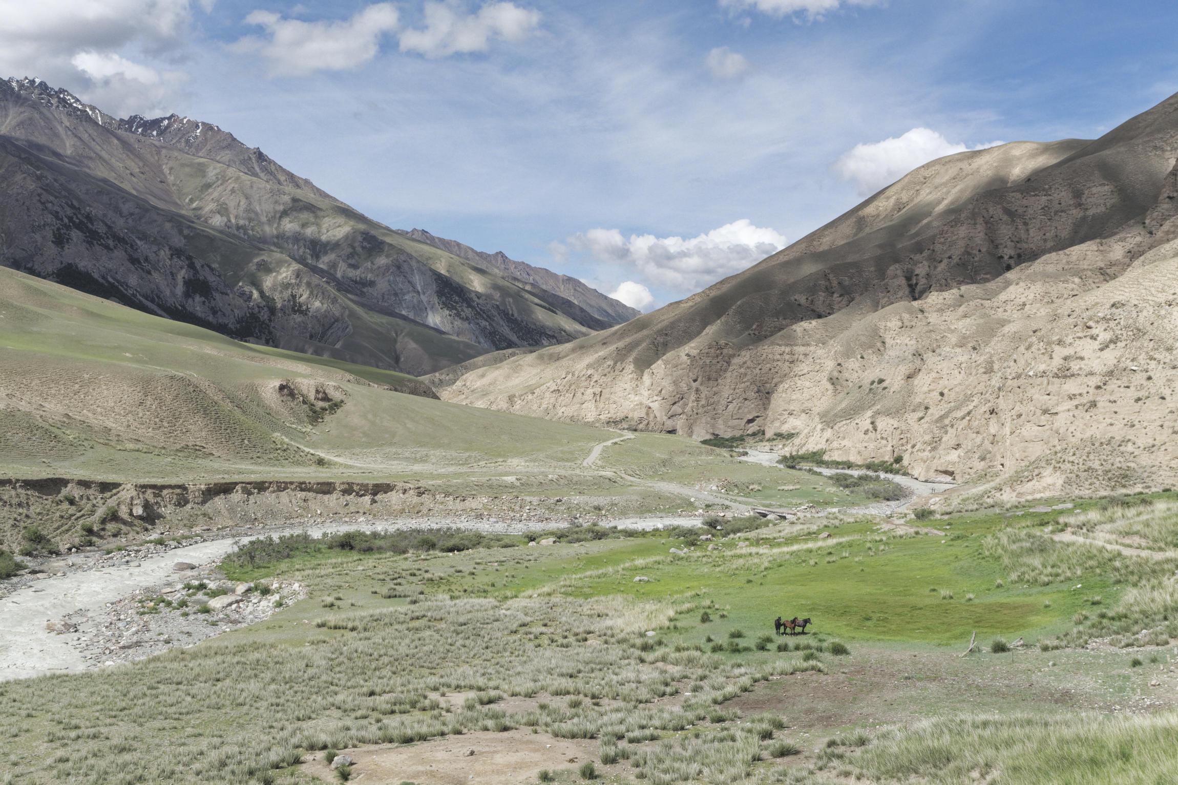 Chevaux dans la vallée de Kaindy Kirghizstan