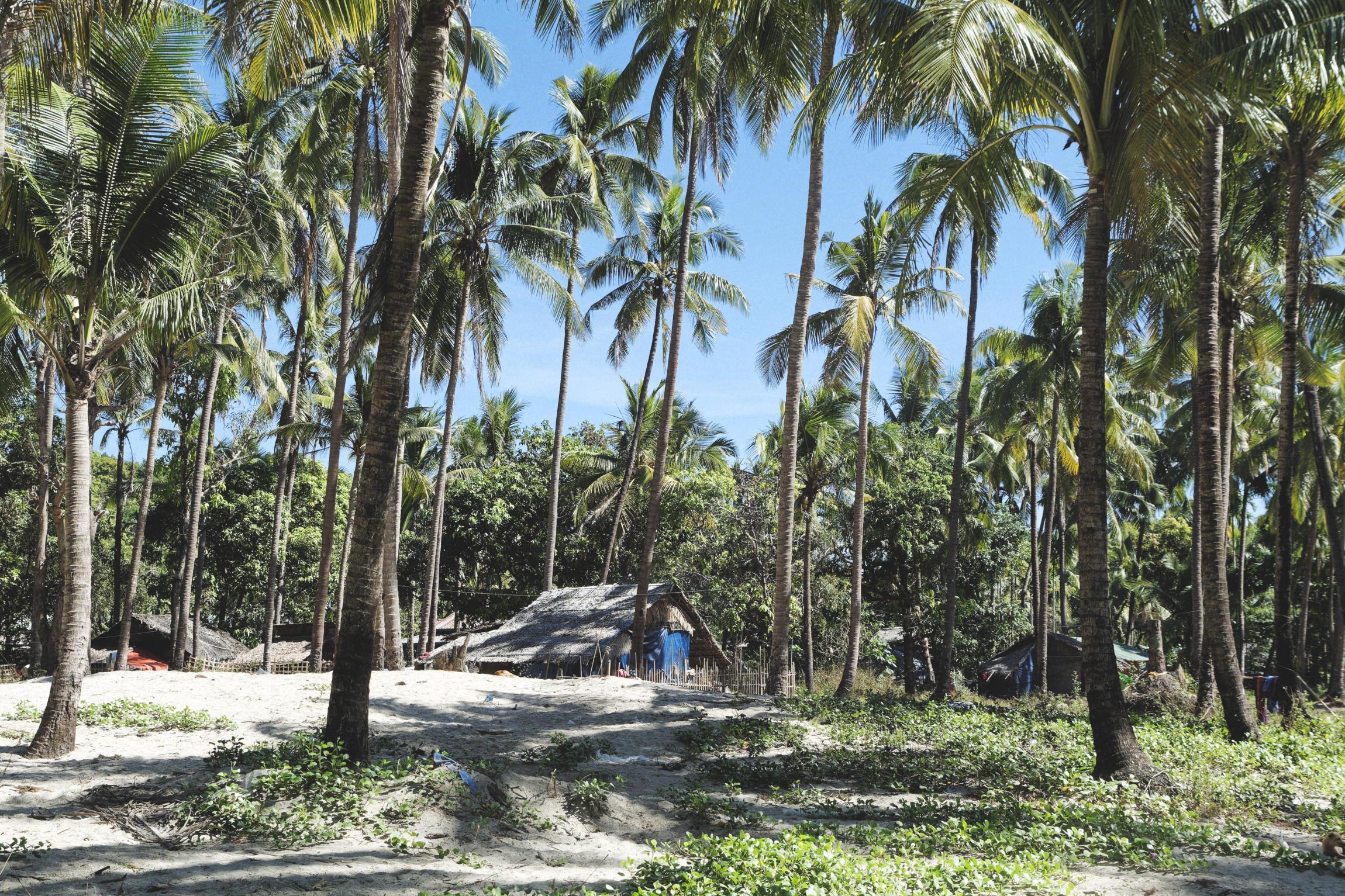 Ngapali maison et cocotiers