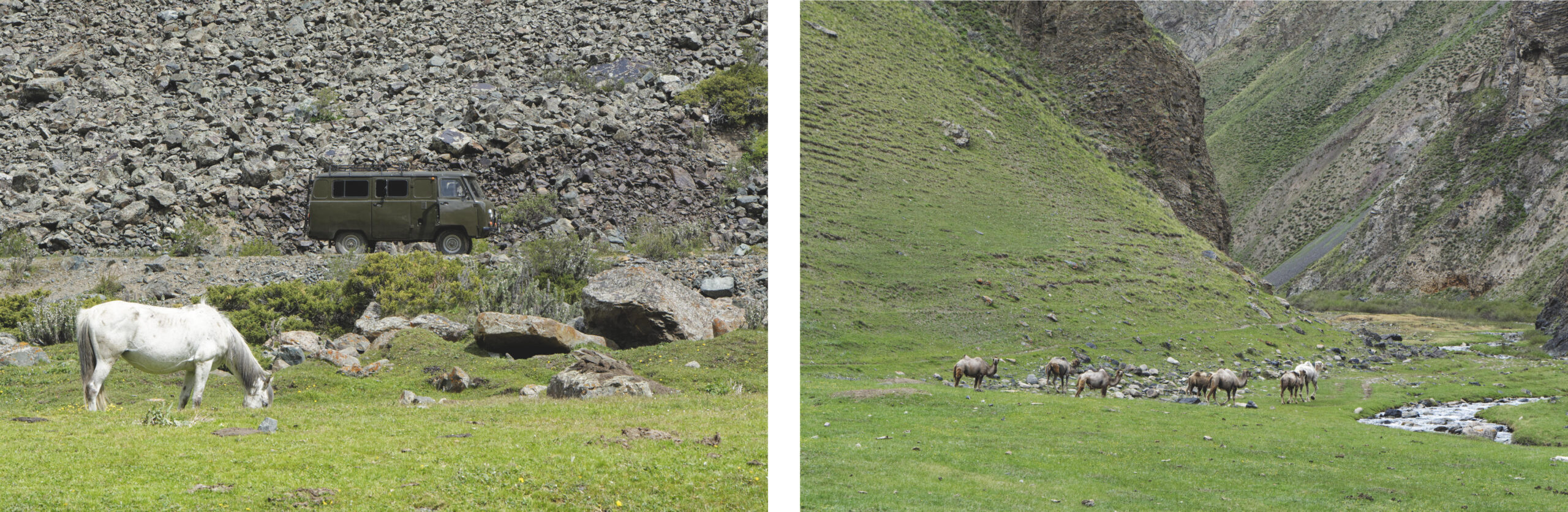 Bukhanka, cheval et chameaux Kirghizstan